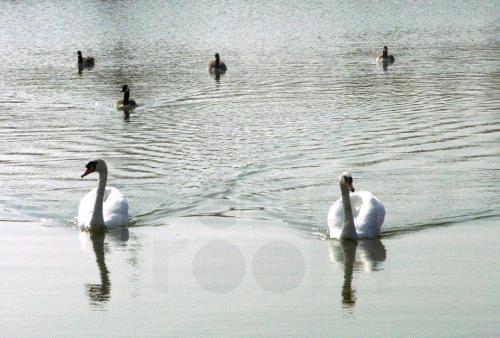 Duck Approach