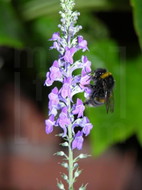 Bee stem