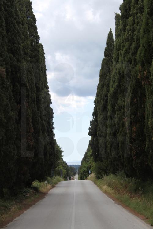 RoadtoBolgheri